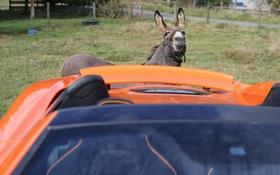 Chú lừa ngốc nghếch gặm xước siêu xe vì tưởng nhầm là cà rốt