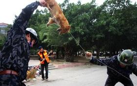 Xử lý chó hoang trên thế giới: Nơi đánh đập, đầu độc, chỗ đưa chó hoang về trung tâm bảo trợ để chờ nhận nuôi