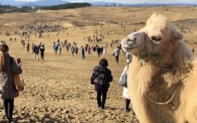 Nhìn này, 90.000 người đã lang thang giữa sa mạc 3 ngày liền chỉ để bắt Pokémon