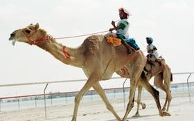 Mảng tối tại đất nước giàu có Ả Rập: Số phận nghiệt ngã của những đứa trẻ nô lệ, bị bắt làm người đua lạc đà