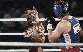 Loạt ảnh chế chú chó sợ hãi khiến bạn xem xong cũng phải buồn cười