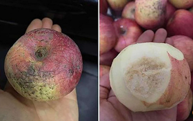Trường mầm non danh tiếng cho trẻ ăn hoa quả thối hỏng
