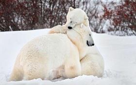 Tiết lộ con gấu yêu thích để biết mẫu người yêu trong mộng