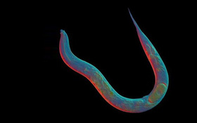 Sinh vật 18 triệu năm không biết sex là gì và đến giờ khoa học mới hiểu tại sao