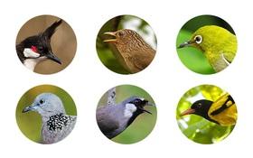 Không biết tên các loài chim thì còn thua trẻ con mẫu giáo