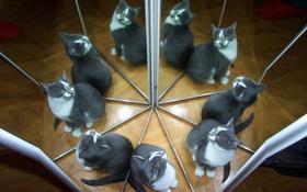 Người có IQ cao mới đếm được có bao nhiêu con mèo đang soi gương