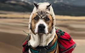 Cặp đôi phượt thủ chó mèo cùng nhau đi tới chân trời góc bể