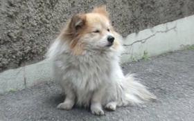 Chú chó bị bỏ rơi 3 năm vẫn đợi chủ, nhưng chủ nhân của nó không hề đáng trách như người ta nghĩ