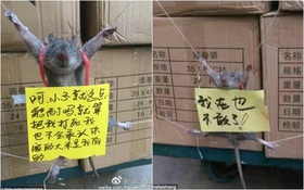 Can tội ăn trộm gạo trong cửa hàng tiện lợi, chú chuột bị trói buộc và bêu riếu trên mạng xã hội
