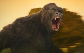 """""""King Kong"""" phiên bản truyền hình đang được thực hiện"""