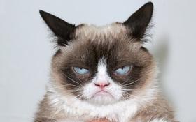 Đây là 5 con mèo nổi tiếng nhất trong lịch sử chế ảnh Internet nhân loại