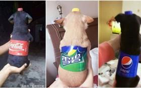 Dân tình đang đổ xô biến thú cưng thành chai nước ngọt trên mạng xã hội