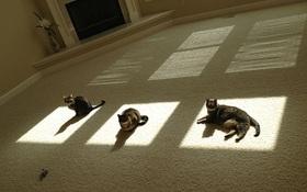 16 bức ảnh chứng minh mèo và nắng là cặp đôi sinh ra vì nhau