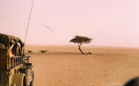Chuyện chiếc cây cô độc nhất hành tinh và thông điệp ẩn giấu đằng sau đó