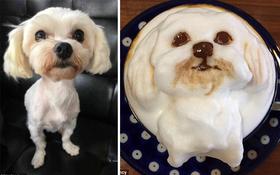 """Cửa hàng vẽ chân dung """"truyền thần"""" của thú cưng trên những cốc cà phê"""