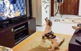 Đội bóng yêu thích ghi bàn thắng, chú chó nhảy nhót điên cuồng như fan chính hiệu