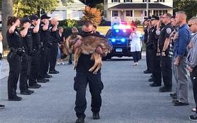 Cảnh sát đứng nghiêm trang tiễn đưa chú chó nghiệp vụ dũng cảm bị mắc bệnh ung thư