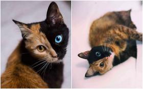 Gặp gỡ bé mèo mặt hai màu khiến cả Instagram điên đảo
