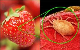 Zoom thật kĩ vào các thực phẩm quen thuộc đi! Bạn sẽ thấy rất nhiều thứ chưa bao giờ thấy