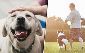 Nghiên cứu quy mô 3 triệu người đã xác nhận một lợi ích tuyệt vời khi nuôi chó