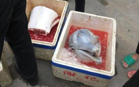 Kinh hãi khi thấy cá heo trắng được xẻ thịt bày bán trên đường phố Trung Quốc