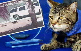 Chú mèo nhận giải thưởng danh dự chỉ dành cho chó nhờ cứu sống cậu bé tự kỷ thoát chết trong gang tấc
