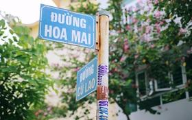 """Đường Hoa Lài, Hoa Sữa đã là gì, Sài Gòn sắp có cả đường tên """"Gạo nàng hương"""", """"Bưởi năm roi""""..."""