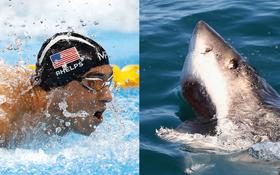 Kình ngư Michael Phelps bơi thi với cá mập trắng