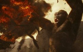 """""""Kong: Skull Island"""" xô đổ mọi kỷ lục doanh thu và lượng khán giả tại các rạp chiếu Việt Nam"""