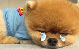 """7 thú cưng """"cute lạc lối"""" nổi đình đám trên Instagram nhất định bạn nên ghé thăm"""