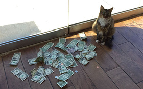 Mạnh thường quân mèo lấy tiền của số đông chia cho người nghèo