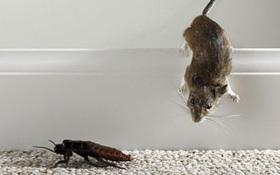 Không phải gián hay chuột, đây mới là sinh vật duy nhất sống sót khi Trái đất bị hủy diệt