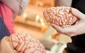 """Bộ não tự """"ăn chính mình"""" và những nguy hại kinh hoàng khi bạn thức khuya thường xuyên"""