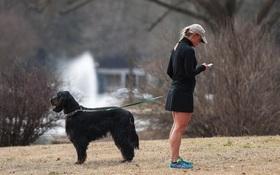 """Thói quen dùng smartphone đang khiến chó cưng """"phát điên"""" và khó dạy hơn bao giờ hết"""