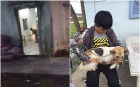 Chú chó đáng thương bị chủ hành hạ được nhóm bạn trẻ cứu thoát với 1,3 triệu tiền chuộc
