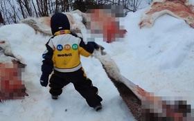 Trường mầm non gây phẫn nộ khi cho học sinh 5 tuổi chứng kiến, tham gia màn giết thịt, lột da tuần lộc