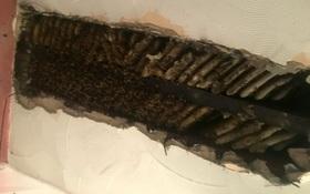 """Thấy chất lỏng kỳ lạ trên tường, người phụ nữ bàng hoàng phát hiện 35 nghìn con ong """"ở nhờ"""" trên trần nhà suốt 2 năm"""