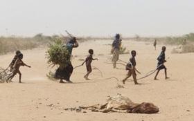 Somalia hạn hán: 110 người chết trong 48 giờ