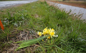 """Cận cảnh con đường đi học có """"điểm chết"""" của bé gái người Việt"""