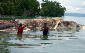 Cuối cùng, các nhà khoa học cũng đã tìm ra quái vật dạt vào bờ biển Indonesia là con gì