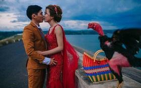 Ảnh cưới của chú rể mê gà chọi, chụp kiểu gì cũng được miễn là phải có gà