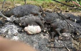 Kinh hoàng cả đàn trâu bị cháy đen vì sét đánh trúng trong cơn giông