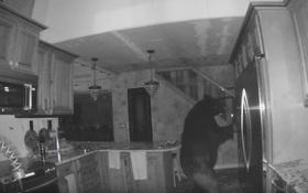 """Thấy đồ ăn vương vãi khắp nơi, chủ nhà bật camera theo dõi mới giật mình phát hiện """"khách không mời"""" trong bếp"""