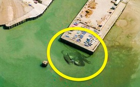 10 hình ảnh lạ lùng nhất có thể tìm thấy ngay trên Google Maps
