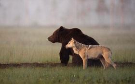 """Ngọt lịm tim """"chuyện tình"""" gấu và sói, không màng định kiến về giống loài để ở bên nhau"""