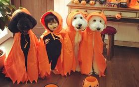 Loạt ảnh hóa trang Halloween hoành tráng nhất mạng xã hội của bé gái Nhật và những người bạn thú cưng
