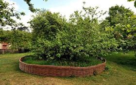 Sự thật đằng sau câu chuyện quả táo rơi trúng đầu Isaac Newton