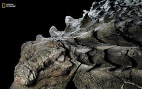 """Hóa thạch khủng long 110 triệu năm được mệnh danh """"cỗ xe tăng 4 chân"""" khiến nhiều người kinh ngạc"""