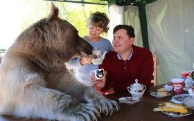 Nuôi thú cưng thế này mới đẳng cấp: Cặp đôi sống chung cùng chú gấu nặng 360kg suốt 24 năm