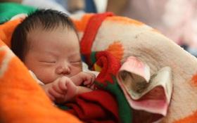 Ôm trẻ sơ sinh ngủ li bì mười mấy tiếng trên tàu, tội ác của cặp vợ chồng bị lật tẩy
